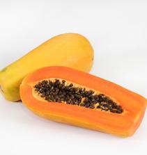 Como Plantar e Cultivar Mamão Papaya
