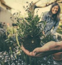 Plantando Temperos