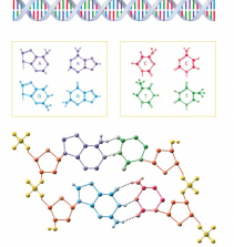 CRISPR: Edição de Genes e seu Impacto