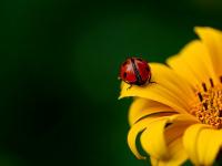 Natureza e preservação