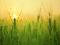 Vídeo aula - noções de proteção ao meio ambiente