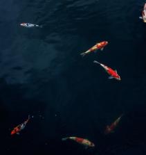 Seleção de dicas de pescaria