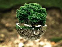Bio-Ecossistema