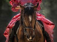 Equitação