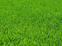Cuidados para grama