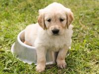 Como dar banho em cachorros e por lacinho