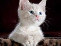 Como dar banho em gatos