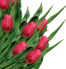 Buquê de flores em e.v.a