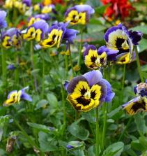 Flores - como montar arranjos, acessórios e buquê