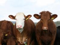 Processos veterinários: inseminação e aplicação de homeopatia