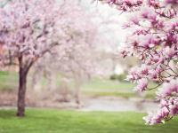 Arvóres e arbustos decorativos