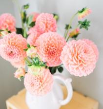Plantas decorativas de interior