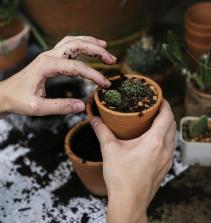 Plantação em vasos e floreiras