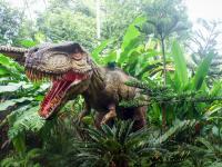 Conhecendo os Dinossauros