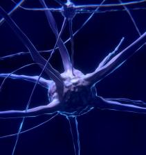 Introdução a neuroanatomia