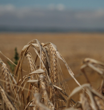 Movimentos sociais, questão agrária e ambiental