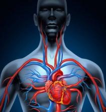 Adaptações do sistema cardiorrespiratório