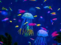 Zoologia dos invertebrados