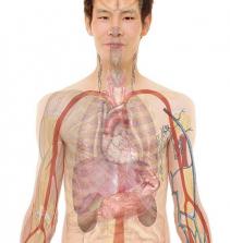 Anatomia: Troncos e Membros