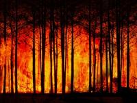 Aprendendo com os grandes incêndios