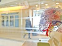 Aspectos neuropsicológicos do desenvolvimento