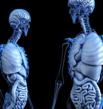 Estudos dos meridianos do baço, estômago, pulmão e intestino grosso
