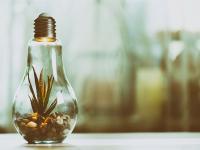A evolução da consciência ambiental
