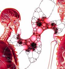 Sistema endócrino e exócrino