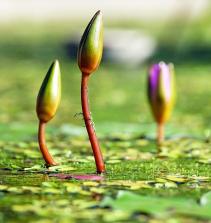 Botânica sistemática vegetal