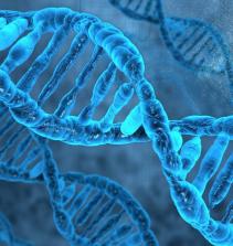 Citogenética e Mutagênese