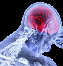 Neurociências E Funções Cognitivas