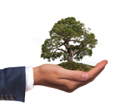 Planejamento e Avaliação de Projetos em Educação Ambiental