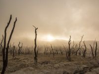 Responsabilidade Civil - Crimes e Infrações Ambientais