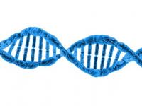 Recursos Didáticos para o Ensino de Ciências e Biologia