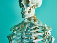 Fisiologia - compreender o corpo humano