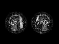 Manipulação da Realidade - Campos Mórficos | Física Quântica | Quantum Digital - Modulo Básico