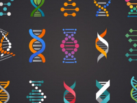 Curso de Biologia para ENEM: Gimnospermas e Angiospermas