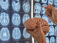 Neurociências da Linguagem