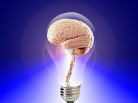 Motricidade e Neurociência