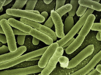 Parasitologia Imunologia