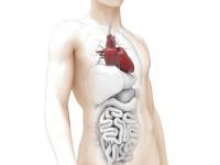 Enfermagem em Doação e Transplante de Órgãos