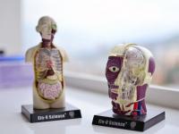 Anatomia Humana 1 e 2